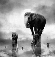 elefanti in equilibrio
